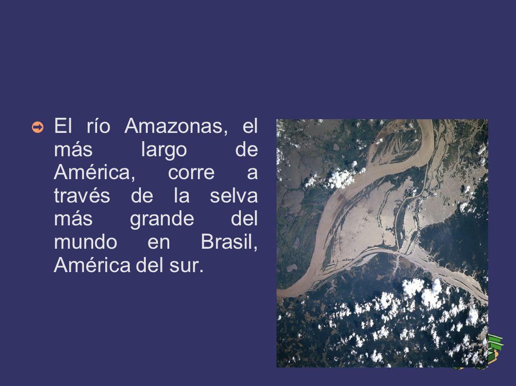 El río Amazonas, el más largo de América, corre a través de la selva más grande del mundo en Brasil, América del sur.