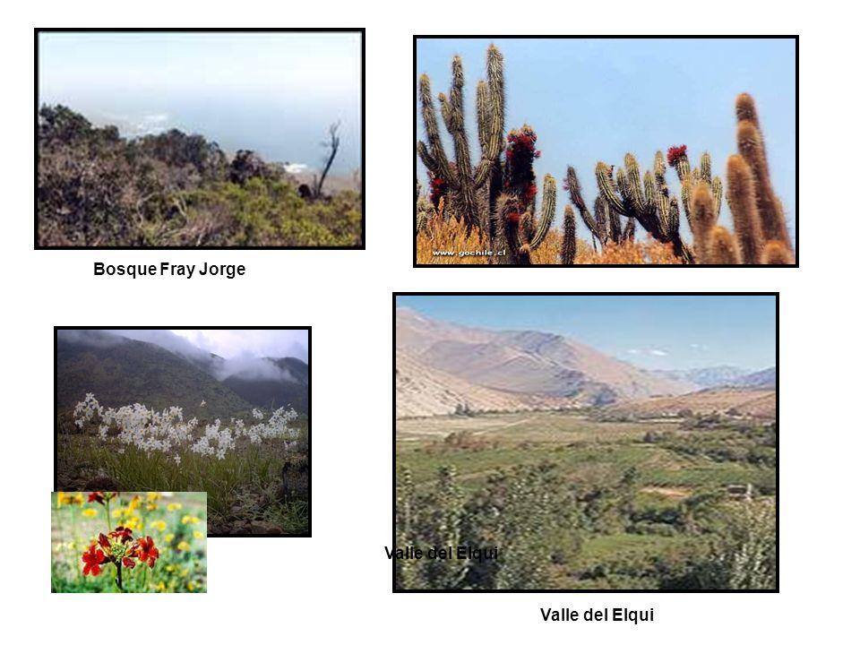 Bosque Fray Jorge Valle del Elqui