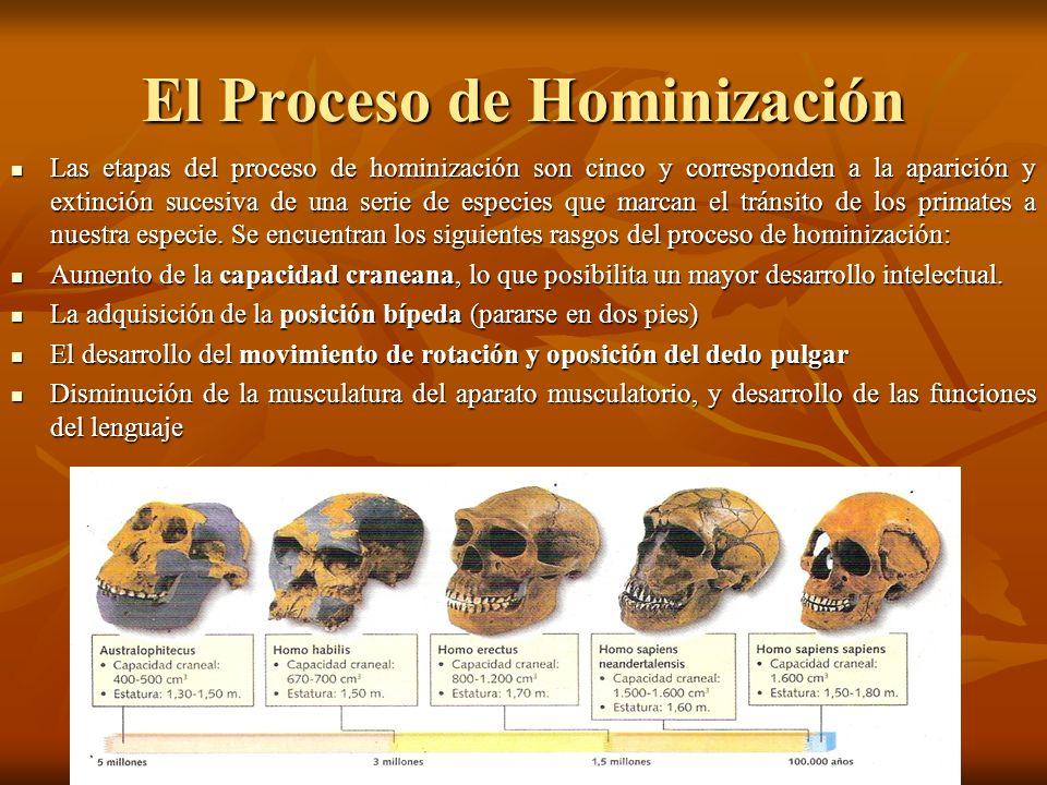 El Proceso de Hominización Las etapas del proceso de hominización son cinco y corresponden a la aparición y extinción sucesiva de una serie de especie