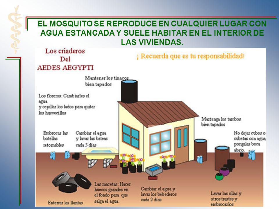 EL MOSQUITO SE REPRODUCE EN CUALQUIER LUGAR CON AGUA ESTANCADA Y SUELE HABITAR EN EL INTERIOR DE LAS VIVIENDAS.