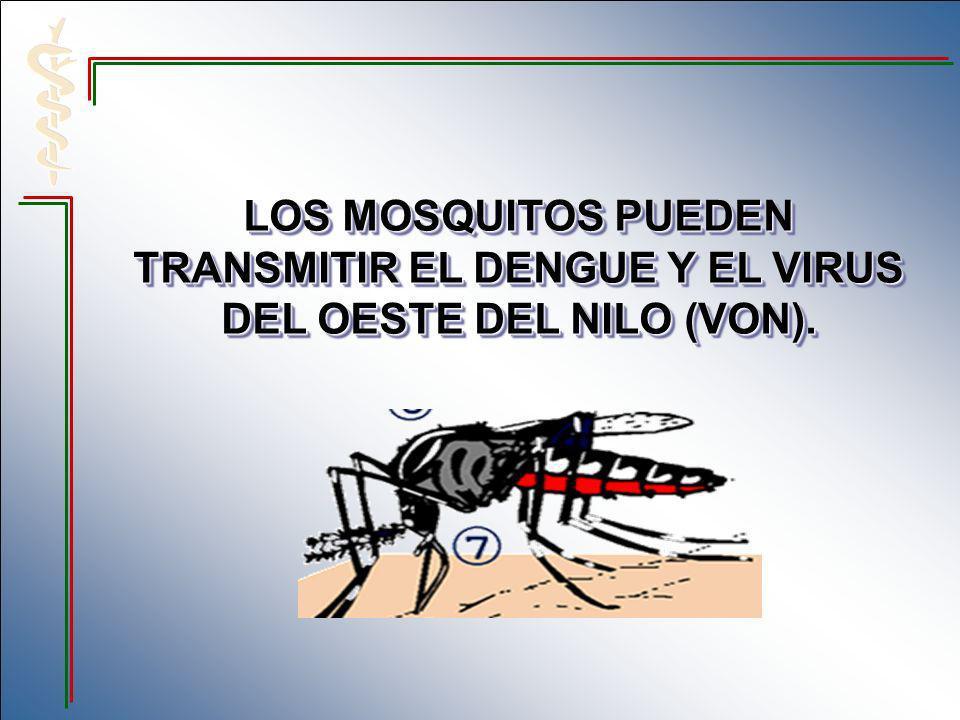 LOS MOSQUITOS PUEDEN TRANSMITIR EL DENGUE Y EL VIRUS DEL OESTE DEL NILO (VON).