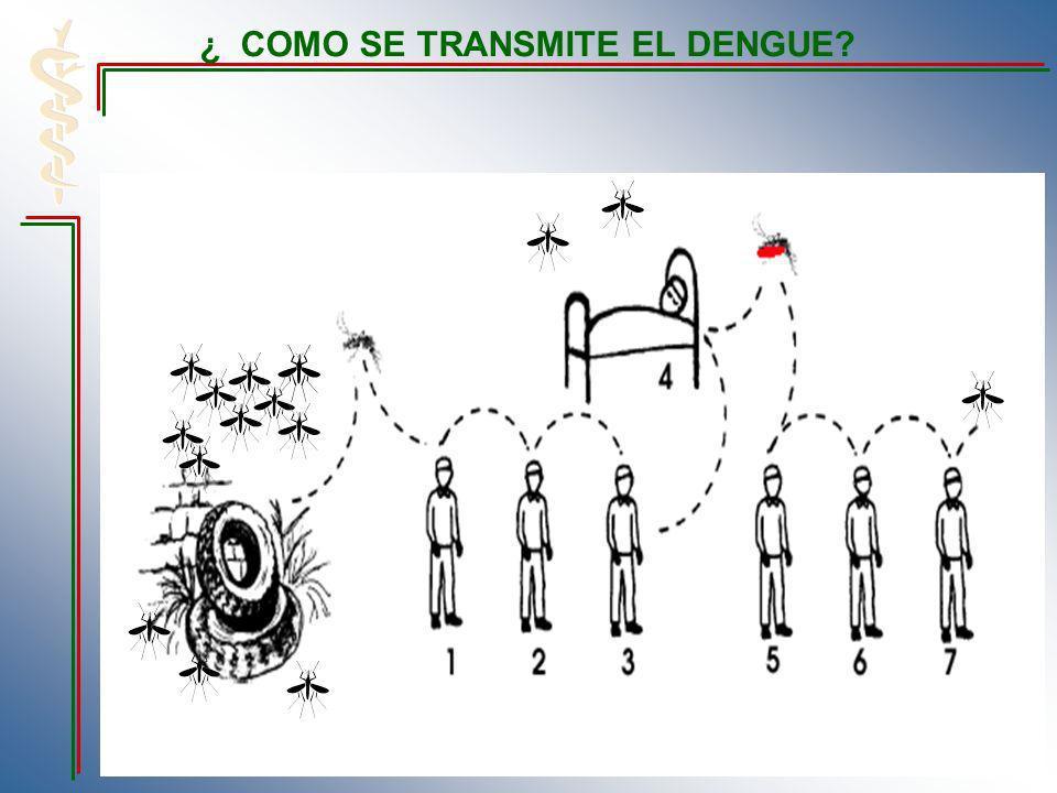 ¿ COMO SE TRANSMITE EL DENGUE?