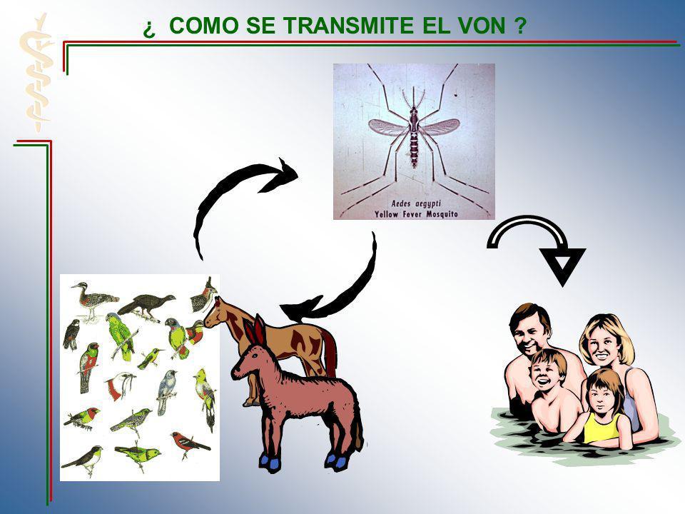 Cuando estalla un brote de dengue en la comunidad, es necesario el empleo de insecticidas por nebulización o rociamiento de volúmenes mínimos del producto.