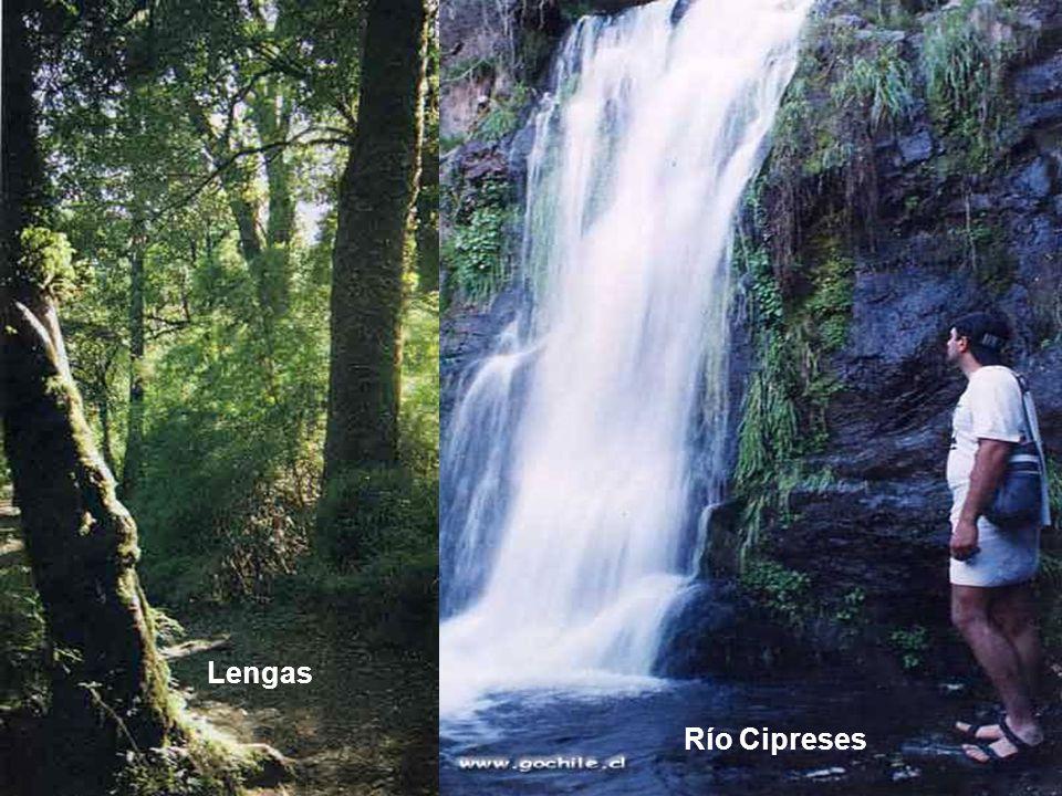 Río Cipreses Lengas