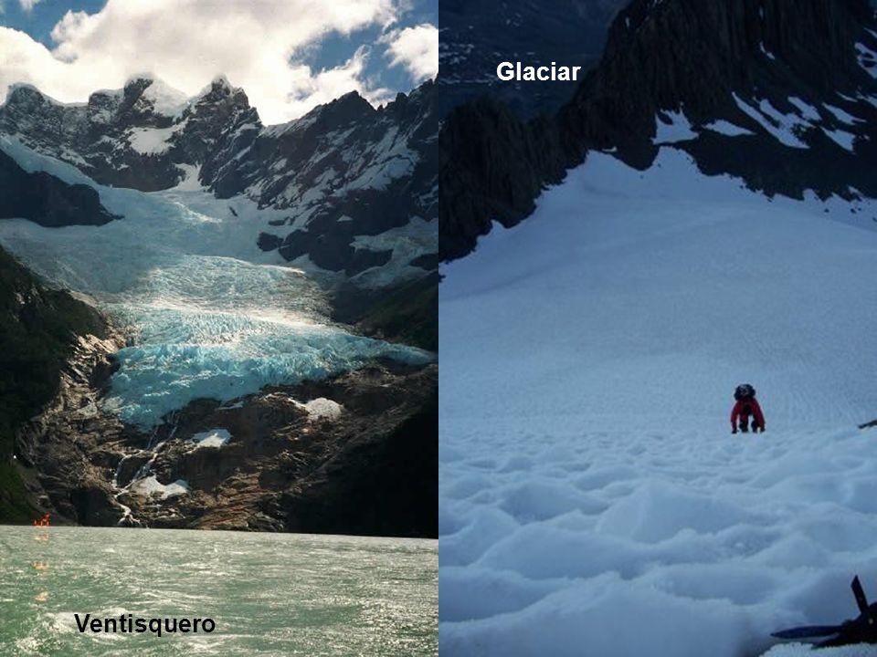 Fauna Introducida Ventisquero Glaciar