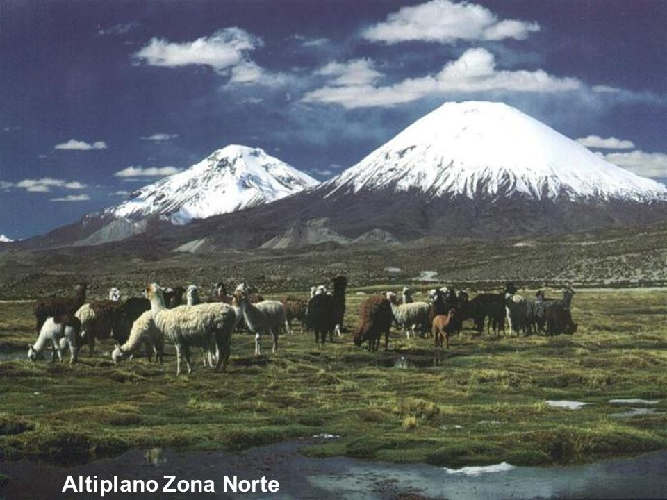 Altiplano Zona Norte