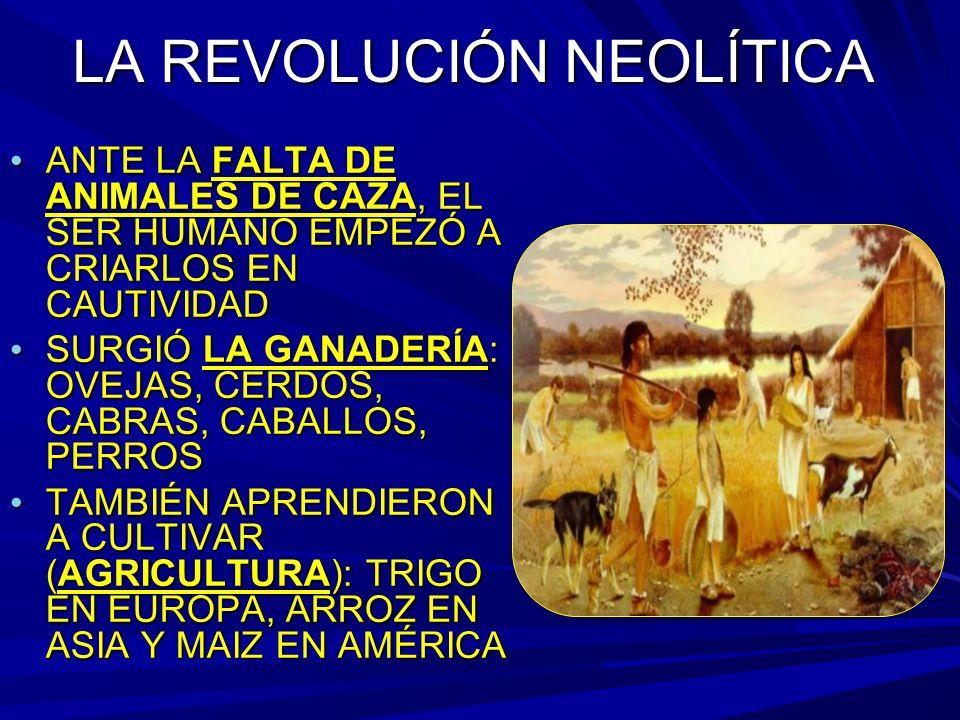 LA REVOLUCIÓN NEOLÍTICA ANTE LA FALTA DE ANIMALES DE CAZA, EL SER HUMANO EMPEZÓ A CRIARLOS EN CAUTIVIDAD ANTE LA FALTA DE ANIMALES DE CAZA, EL SER HUMANO EMPEZÓ A CRIARLOS EN CAUTIVIDAD SURGIÓ LA GANADERÍA: OVEJAS, CERDOS, CABRAS, CABALLOS, PERROS SURGIÓ LA GANADERÍA: OVEJAS, CERDOS, CABRAS, CABALLOS, PERROS TAMBIÉN APRENDIERON A CULTIVAR (AGRICULTURA): TRIGO EN EUROPA, ARROZ EN ASIA Y MAIZ EN AMÉRICA TAMBIÉN APRENDIERON A CULTIVAR (AGRICULTURA): TRIGO EN EUROPA, ARROZ EN ASIA Y MAIZ EN AMÉRICA