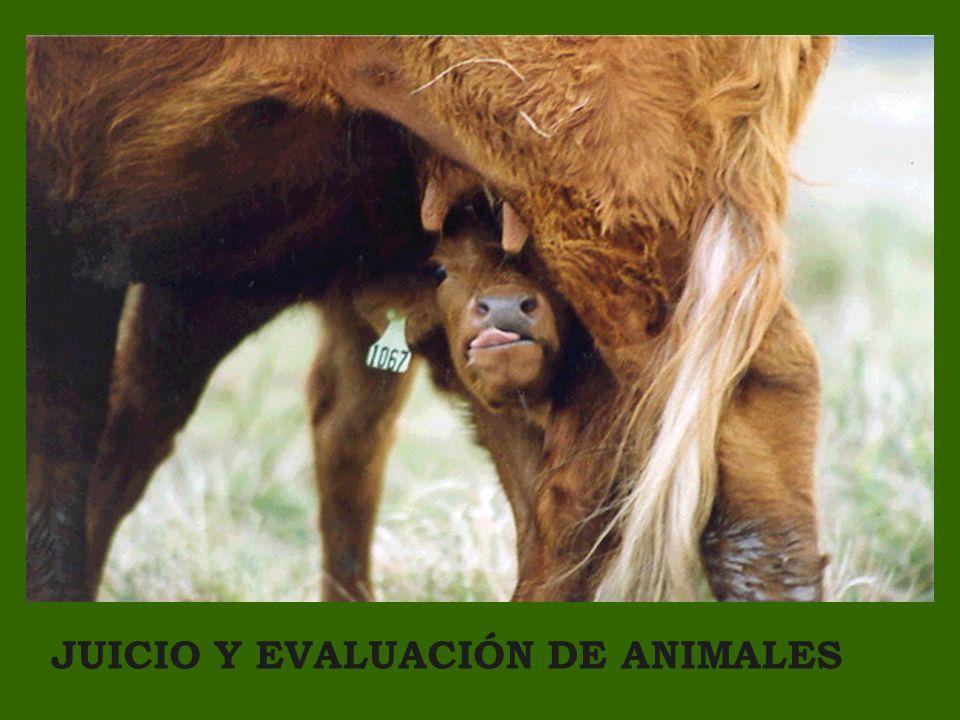 JUICIO Y EVALUACIÓN DE ANIMALES