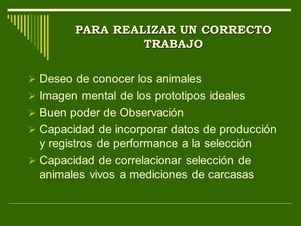 PARA REALIZAR UN CORRECTO TRABAJO Deseo de conocer los animales Imagen mental de los prototipos ideales Buen poder de Observación Capacidad de incorpo