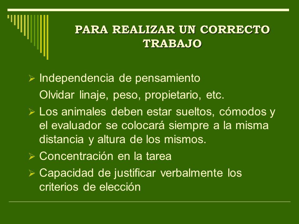PARA REALIZAR UN CORRECTO TRABAJO Independencia de pensamiento Olvidar linaje, peso, propietario, etc. Los animales deben estar sueltos, cómodos y el