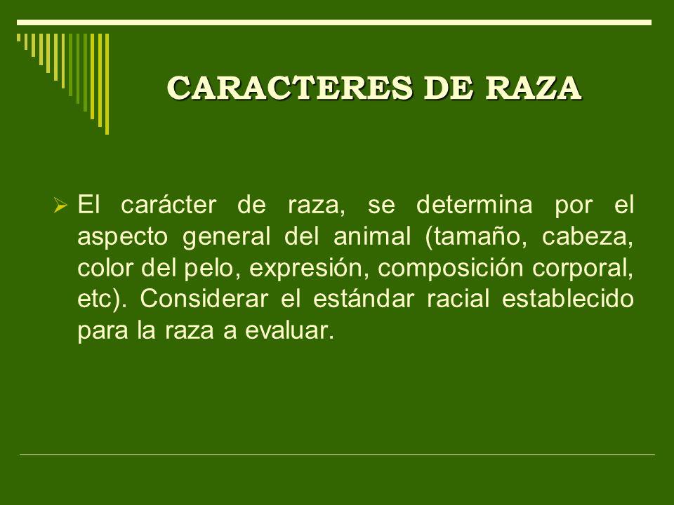 CARACTERES DE RAZA El carácter de raza, se determina por el aspecto general del animal (tamaño, cabeza, color del pelo, expresión, composición corpora