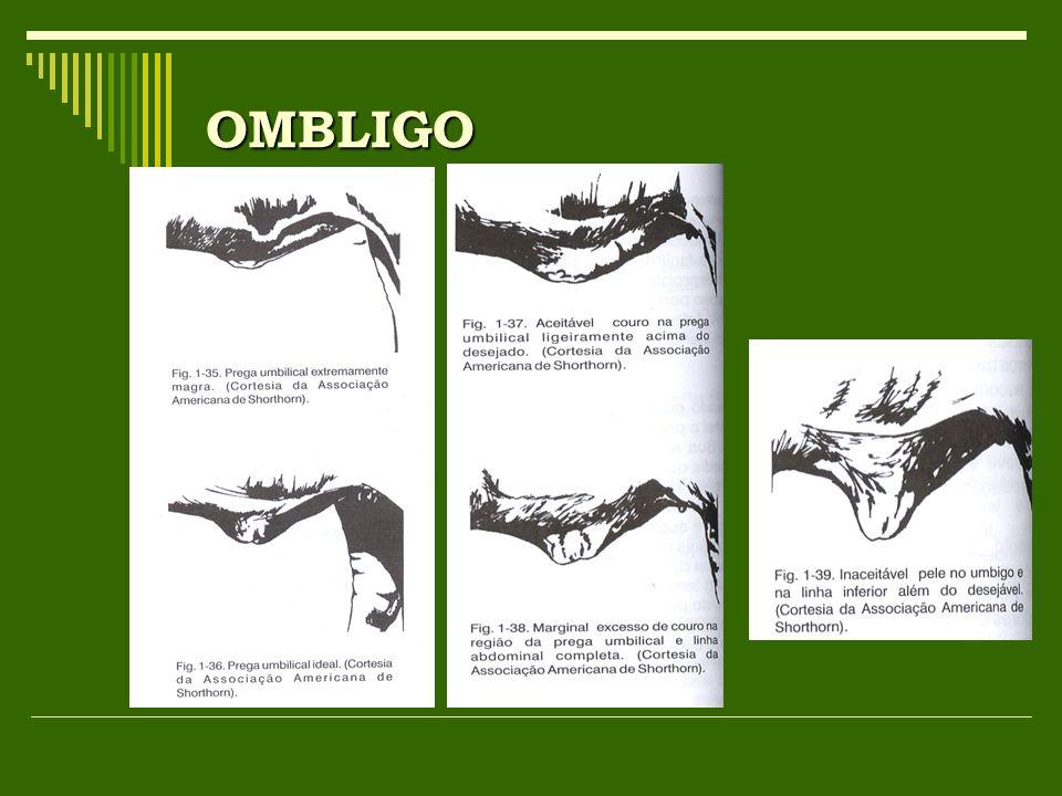 OMBLIGO