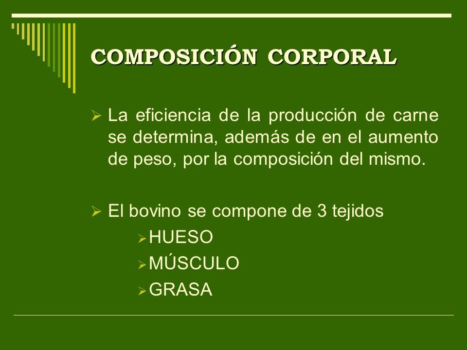 COMPOSICIÓN CORPORAL La eficiencia de la producción de carne se determina, además de en el aumento de peso, por la composición del mismo. El bovino se