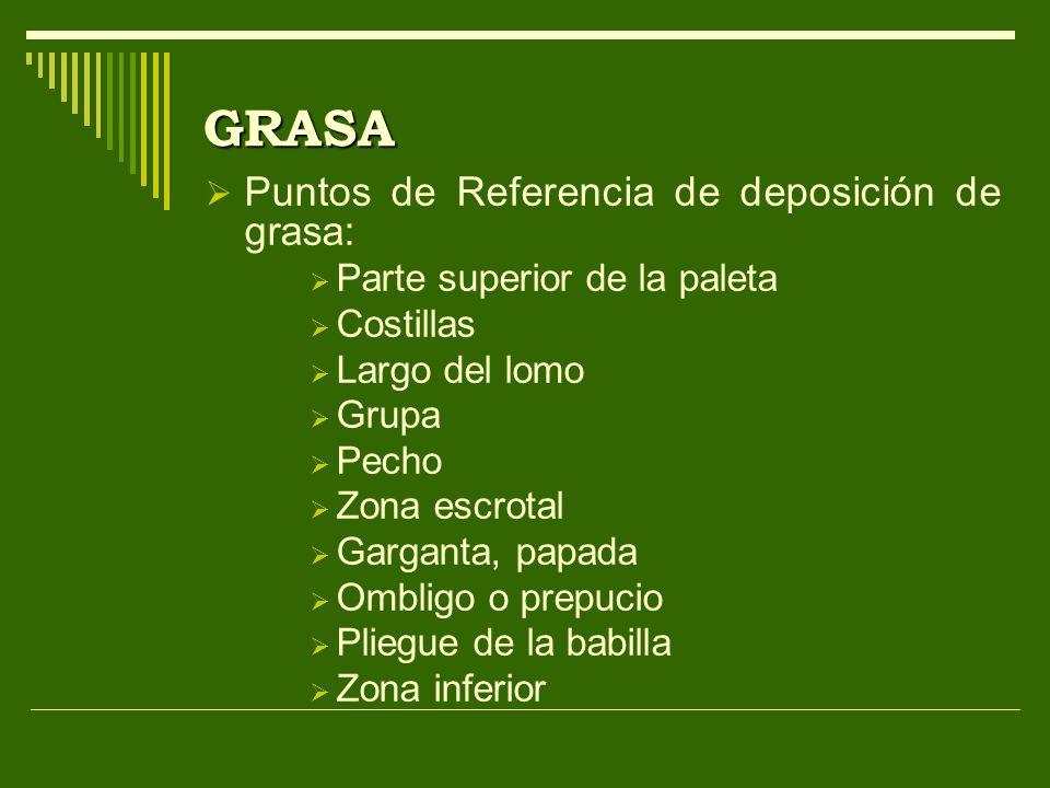 GRASA Puntos de Referencia de deposición de grasa: Parte superior de la paleta Costillas Largo del lomo Grupa Pecho Zona escrotal Garganta, papada Omb