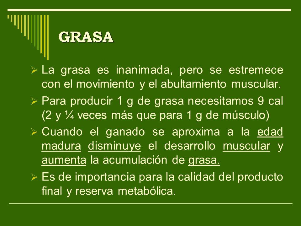 GRASA La grasa es inanimada, pero se estremece con el movimiento y el abultamiento muscular. Para producir 1 g de grasa necesitamos 9 cal (2 y ¼ veces