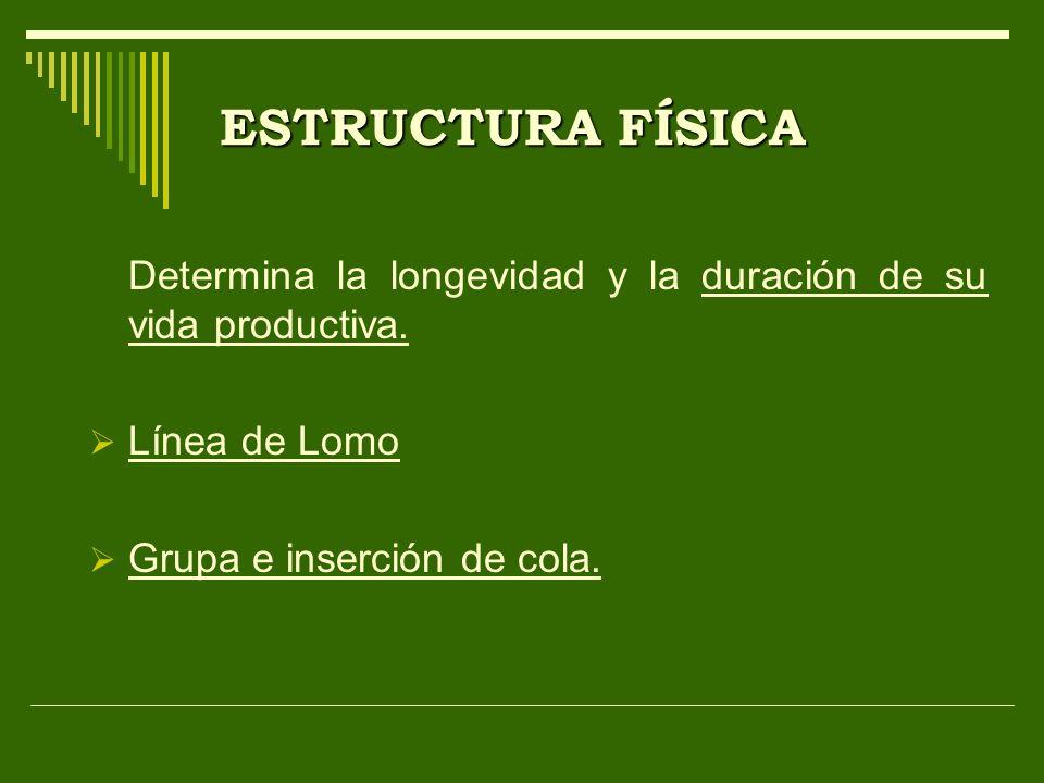 Determina la longevidad y la duración de su vida productiva. Línea de Lomo Grupa e inserción de cola.