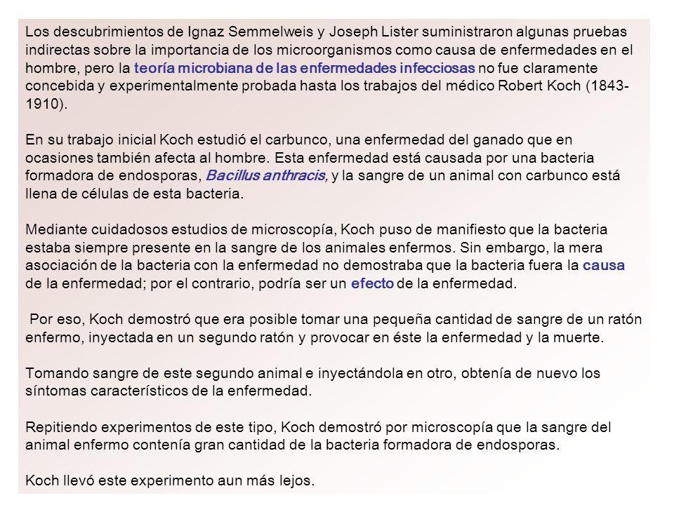 Los descubrimientos de Ignaz Semmelweis y Joseph Lister suministraron algunas pruebas indirectas sobre la importancia de los microorganismos como caus