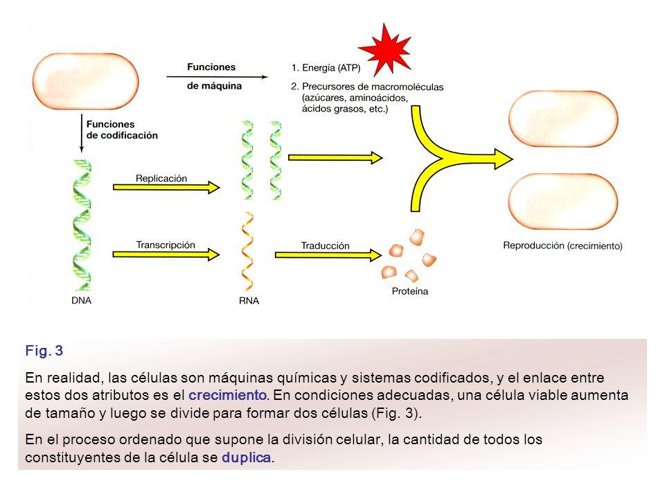 Fig. 3 En realidad, las células son máquinas químicas y sistemas codificados, y el enlace entre estos dos atributos es el crecimiento. En condiciones