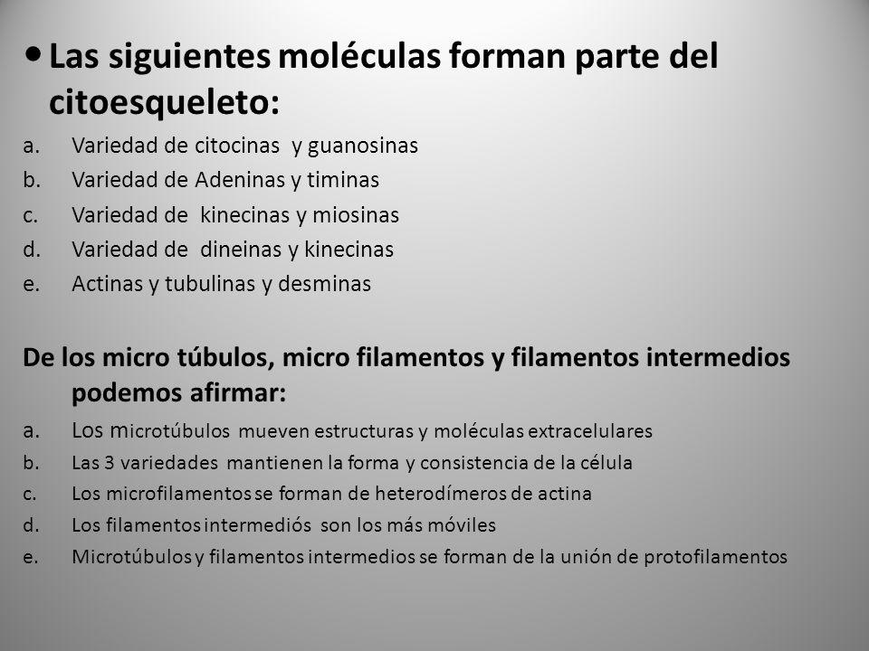 Las siguientes moléculas forman parte del citoesqueleto: a.Variedad de citocinas y guanosinas b.Variedad de Adeninas y timinas c.Variedad de kinecinas