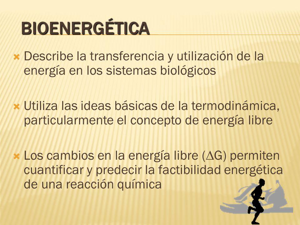 BIOENERGÉTICA Describe la transferencia y utilización de la energía en los sistemas biológicos Utiliza las ideas básicas de la termodinámica, particul