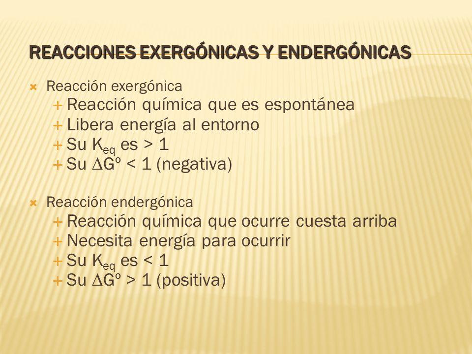 Reacción exergónica Reacción química que es espontánea Libera energía al entorno Su K eq es > 1 Su Gº < 1 (negativa) Reacción endergónica Reacción quí