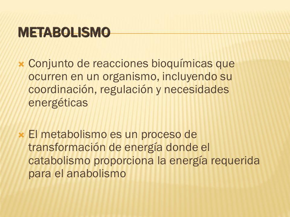 METABOLISMO Conjunto de reacciones bioquímicas que ocurren en un organismo, incluyendo su coordinación, regulación y necesidades energéticas El metabo