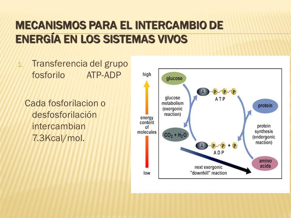 MECANISMOS PARA EL INTERCAMBIO DE ENERGÍA EN LOS SISTEMAS VIVOS 1. Transferencia del grupo fosforilo ATP-ADP Cada fosforilacion o desfosforilación int