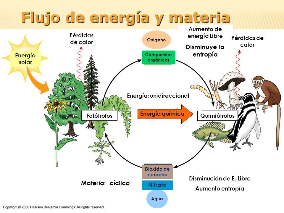 Pérdidas de calor Energía solar Aumento de energía Libre Disminuye la entropía Pérdidas de calor Disminución de E. Libre Aumento entropía FotótrofosQu