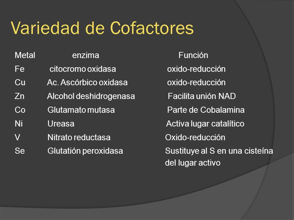 Variedad de Cofactores Metalenzima Función Fe citocromo oxidasa oxido-reducción Cu Ac. Ascórbico oxidasa oxido-reducción Zn Alcohol deshidrogenasa Fac