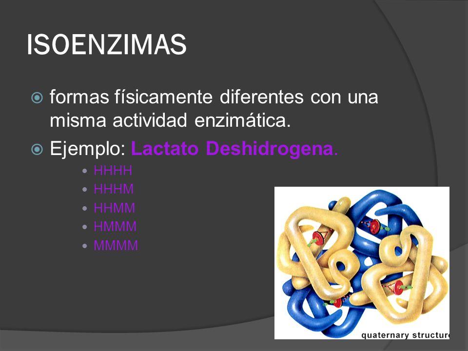 ISOENZIMAS formas físicamente diferentes con una misma actividad enzimática. Ejemplo: Lactato Deshidrogena. HHHH HHHM HHMM HMMM MMMM