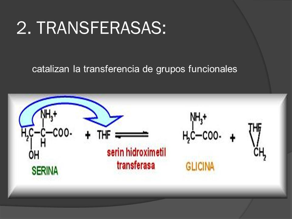 2. TRANSFERASAS: catalizan la transferencia de grupos funcionales