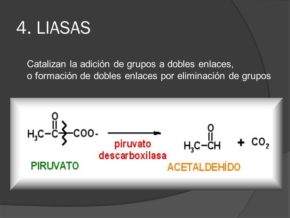 4. LIASAS Catalizan la adición de grupos a dobles enlaces, o formación de dobles enlaces por eliminación de grupos