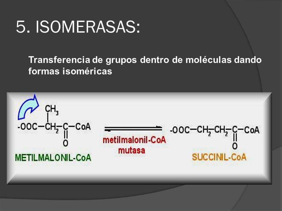 5. ISOMERASAS: Transferencia de grupos dentro de moléculas dando formas isoméricas