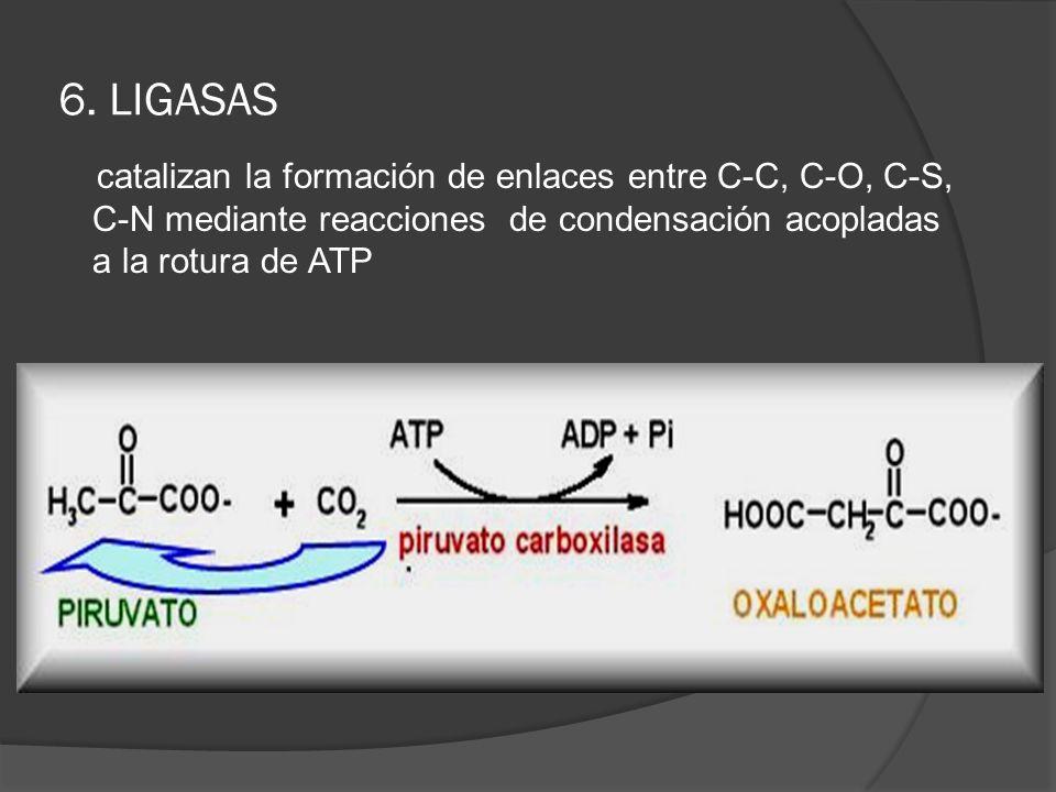 6. LIGASAS catalizan la formación de enlaces entre C-C, C-O, C-S, C-N mediante reacciones de condensación acopladas a la rotura de ATP