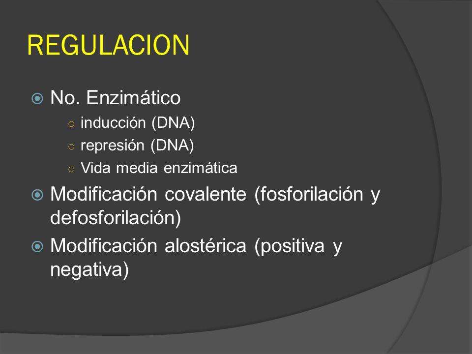 REGULACION No. Enzimático inducción (DNA) represión (DNA) Vida media enzimática Modificación covalente (fosforilación y defosforilación) Modificación