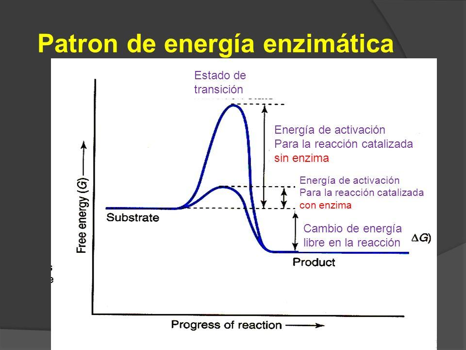 29 Patron de energía enzimática Estado de transición Energía de activación Para la reacción catalizada sin enzima Energía de activación Para la reacci