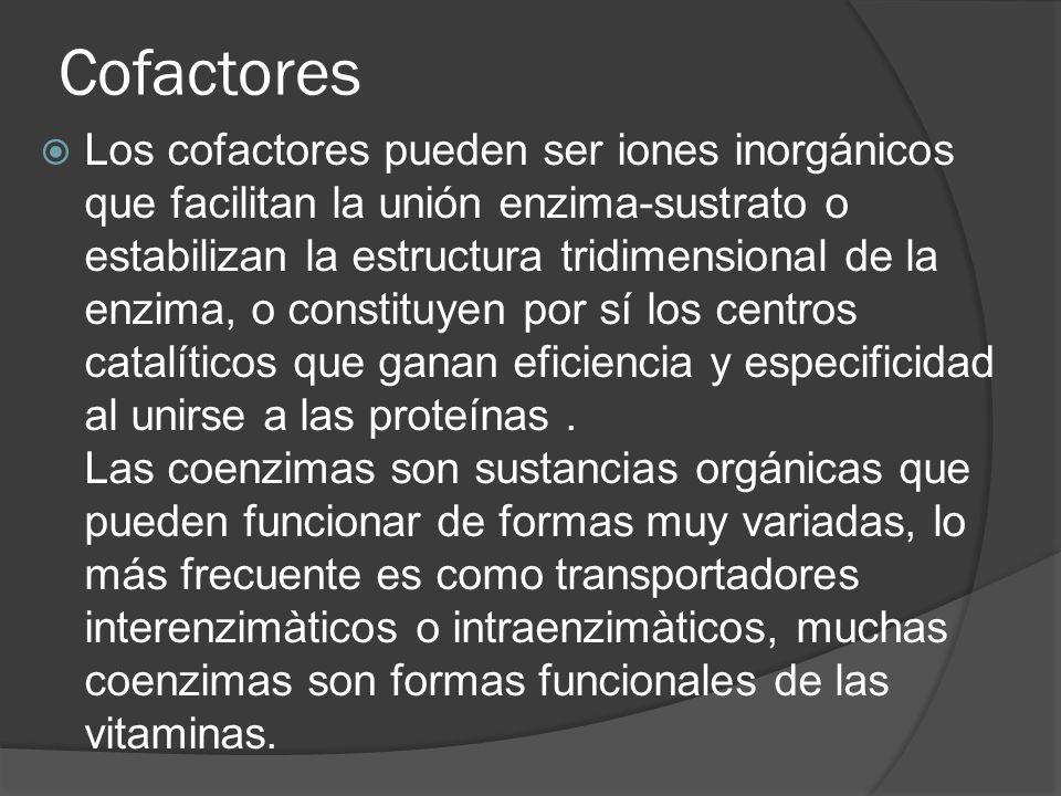 Cofactores Los cofactores pueden ser iones inorgánicos que facilitan la unión enzima-sustrato o estabilizan la estructura tridimensional de la enzima,