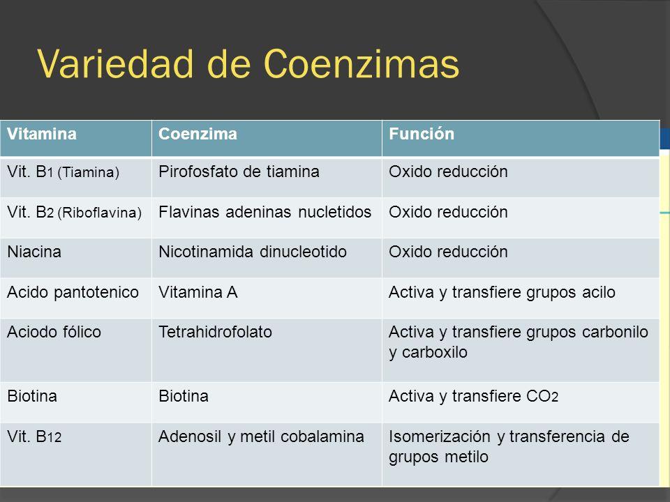 Variedad de Coenzimas VitaminaCoenzimaFunción Vit. B 1 (Tiamina) Pirofosfato de tiaminaOxido reducción Vit. B 2 (Riboflavina) Flavinas adeninas nuclet