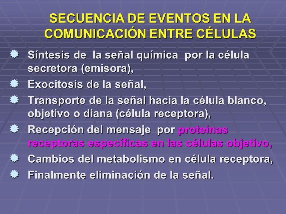 SECUENCIA DE EVENTOS EN LA COMUNICACIÓN ENTRE CÉLULAS Síntesis de la señal química por la célula secretora (emisora), Síntesis de la señal química por