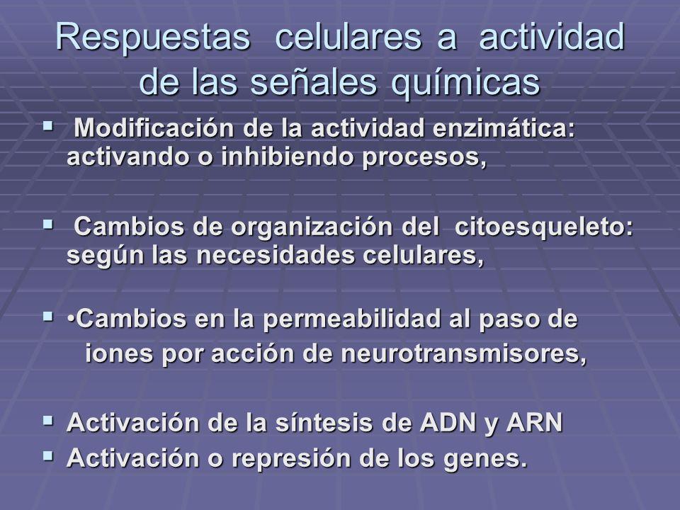 Respuestas celulares a actividad de las señales químicas Modificación de la actividad enzimática: activando o inhibiendo procesos, Modificación de la