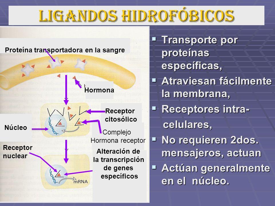 LIGANDOS HIDROFÓBICOS Transporte por proteínas específicas, Transporte por proteínas específicas, Atraviesan fácilmente la membrana, Atraviesan fácilm
