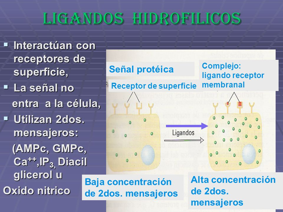 LIGANDOS HIDROFILICOS Interactúan con receptores de superficie, Interactúan con receptores de superficie, La señal no La señal no entra a la célula, e