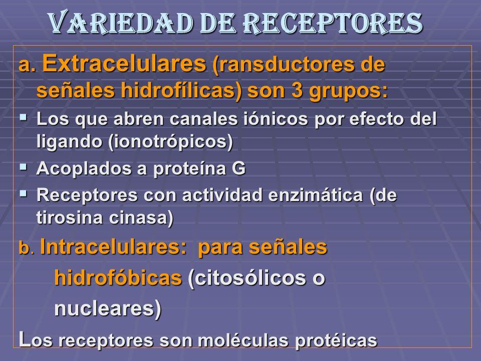 Variedad de Receptores a. Extracelulares (ransductores de señales hidrofílicas) son 3 grupos: Los que abren canales iónicos por efecto del ligando (io