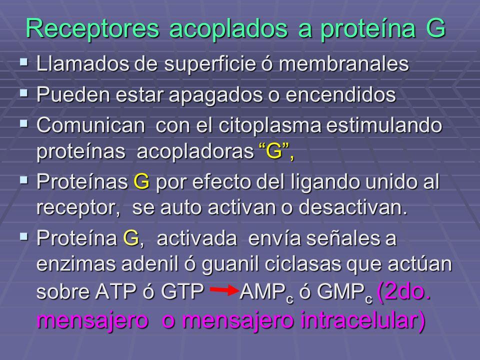 Receptores acoplados a proteína G Llamados de superficie ó membranales Llamados de superficie ó membranales Pueden estar apagados o encendidos Pueden estar apagados o encendidos Comunican con el citoplasma estimulando proteínas acopladoras G, Comunican con el citoplasma estimulando proteínas acopladoras G, Proteínas G por efecto del ligando unido al receptor, se auto activan o desactivan.