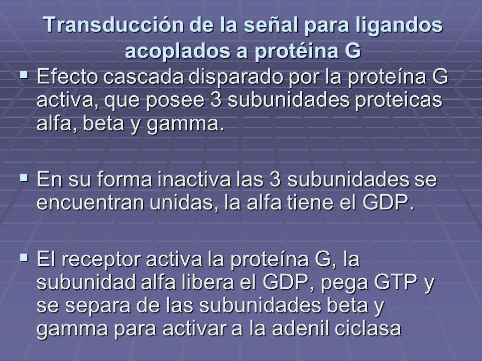Transducción de la señal para ligandos acoplados a protéina G Efecto cascada disparado por la proteína G activa, que posee 3 subunidades proteicas alfa, beta y gamma.