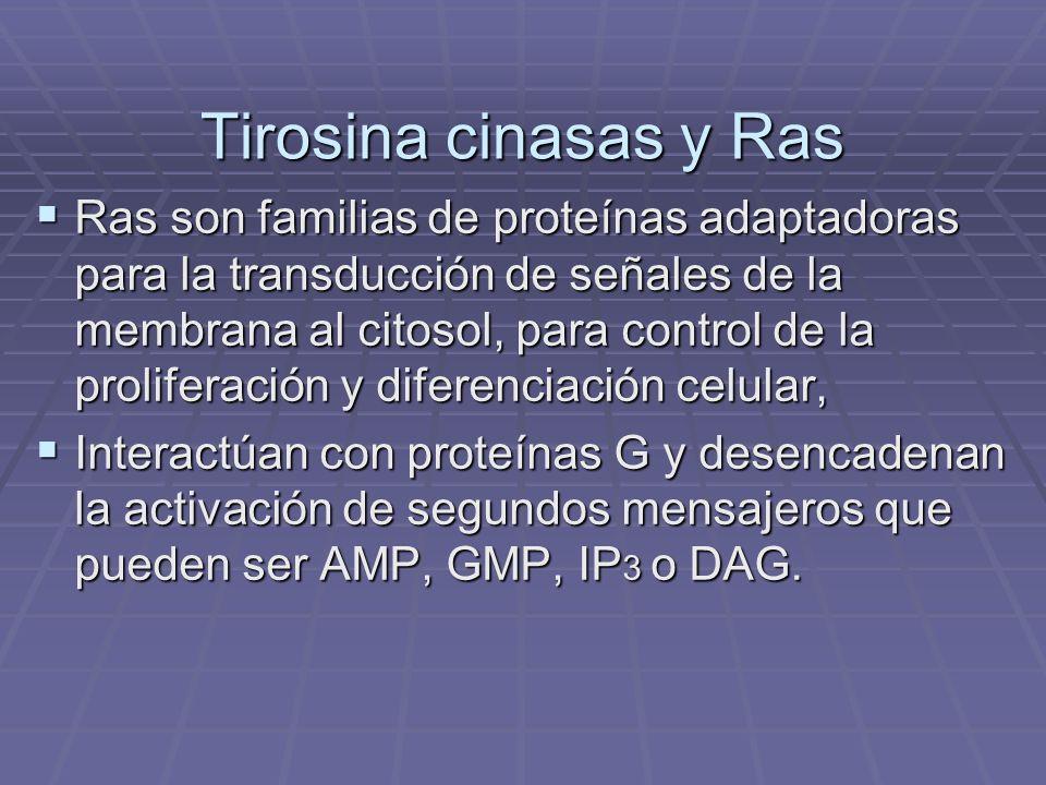 Tirosina cinasas y Ras Tirosina cinasas y Ras Ras son familias de proteínas adaptadoras para la transducción de señales de la membrana al citosol, par