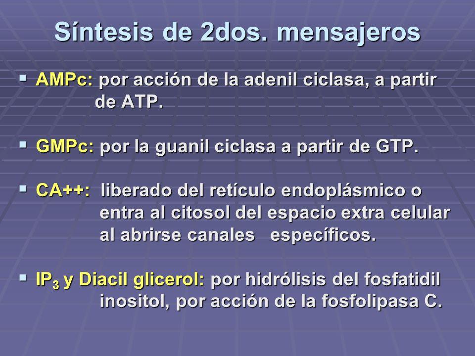 Síntesis de 2dos. mensajeros AMPc: por acción de la adenil ciclasa, a partir AMPc: por acción de la adenil ciclasa, a partir de ATP. de ATP. GMPc: por