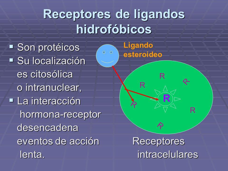 Receptores de ligandos hidrofóbicos Son protéicos Son protéicos Su localización Su localización es citosólica es citosólica o intranuclear, o intranuclear, La interacción La interacción hormona-receptor hormona-receptor desencadena desencadena eventos de acción Receptores eventos de acción Receptores lenta.