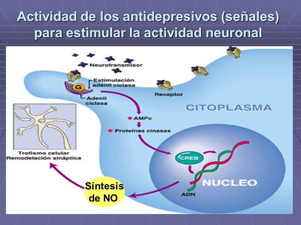 Actividad de los antidepresivos (señales) para estimular la actividad neuronal Síntesis de NO