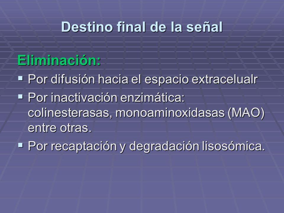 Destino final de la señal Eliminación: Por difusión hacia el espacio extracelualr Por difusión hacia el espacio extracelualr Por inactivación enzimática: colinesterasas, monoaminoxidasas (MAO) entre otras.